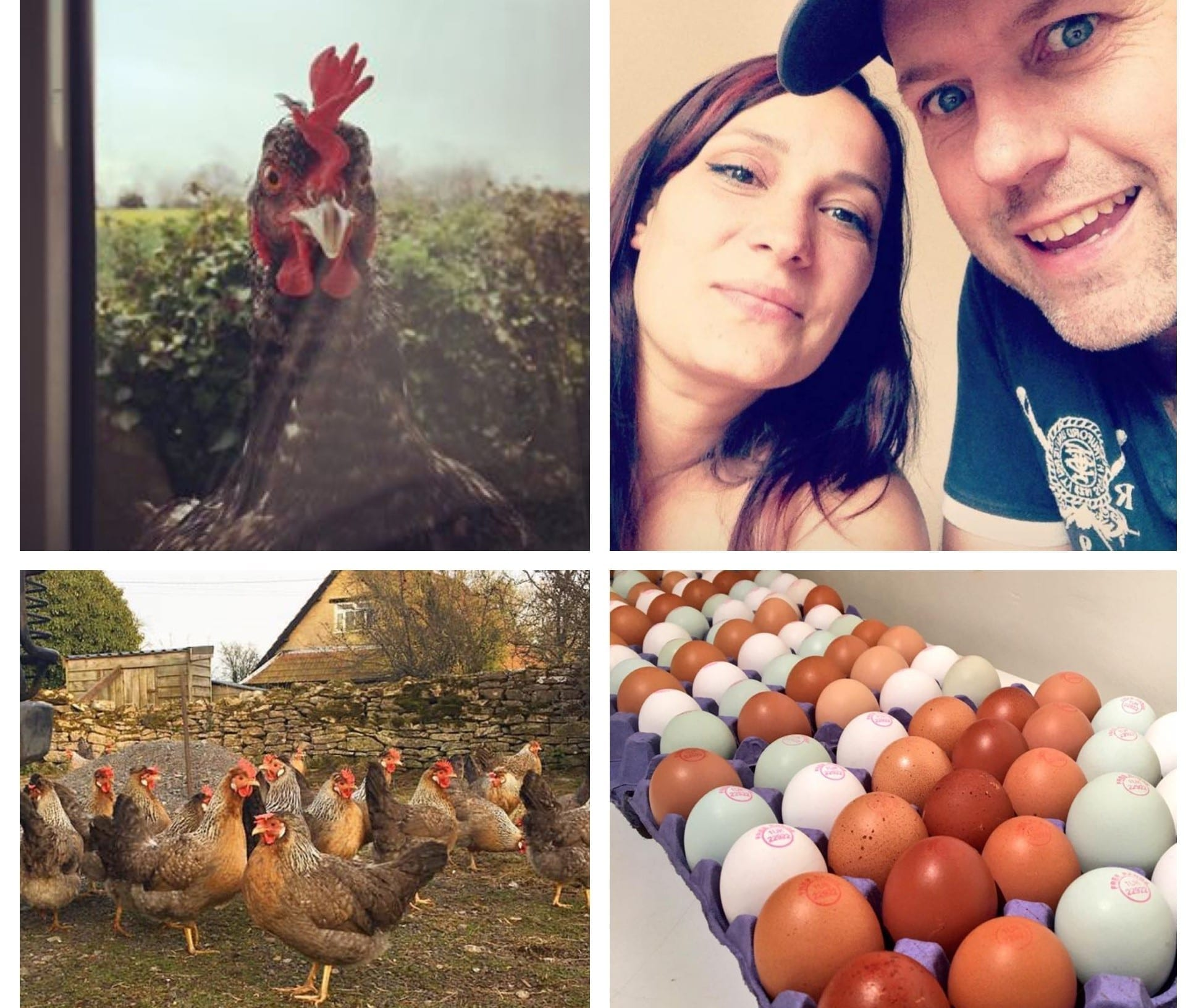 Hartley Farm laid eggs take the shop by storm!