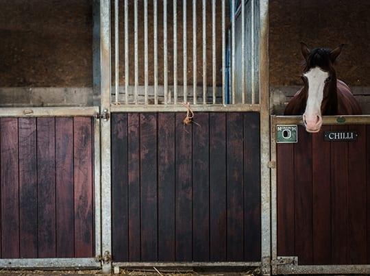 equestrian-2col