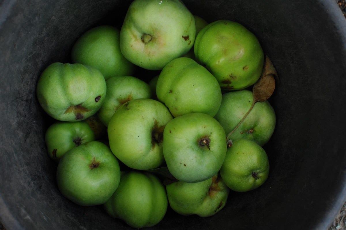 Bramley Apple -approx 500g