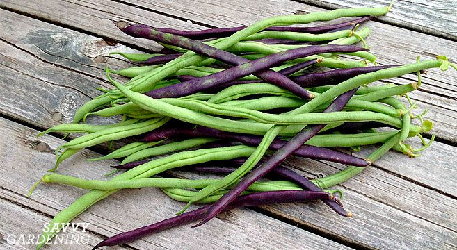 Mixed French Beans - 250g